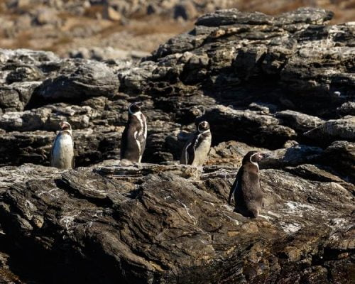 Pinguino de Humbold National Reserve @Sernatur